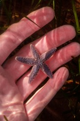 Starfish - Happy to see a live one after collecting dead ones from various beaches