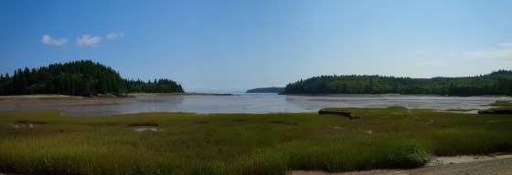 Salt Marsh - Bay of Fundy, NB
