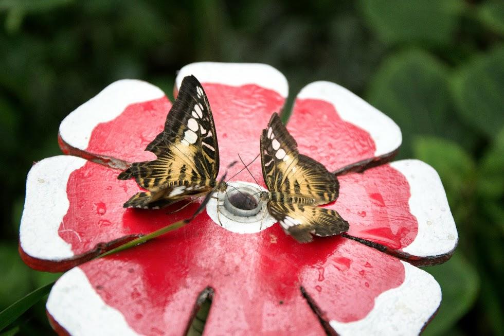 Casa delle Farfalle, un piccolo paradiso tropicale alle falde dell'Etna
