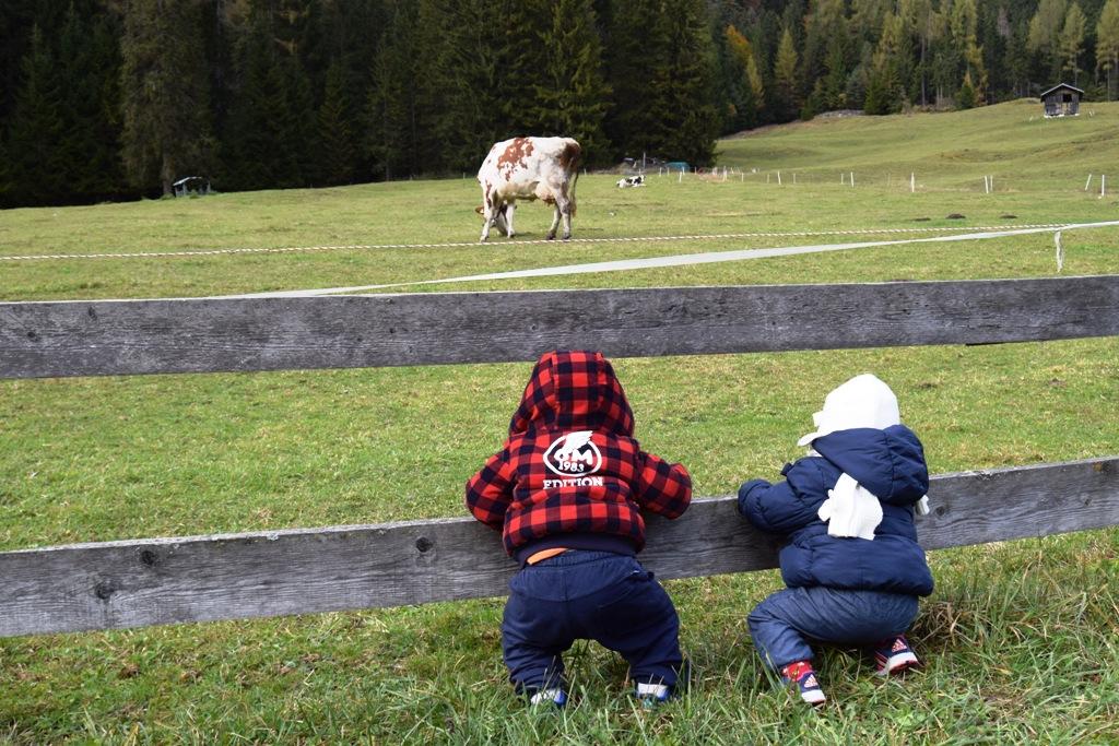 bambini che guardano le mucche a sappada