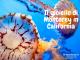 meduse all'acquario di monterey in california