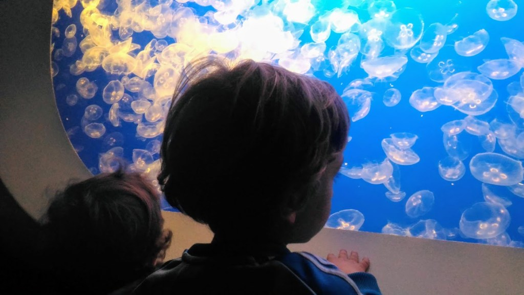 bambini che osservano una vasca di meduse all'acquario di monterey in california