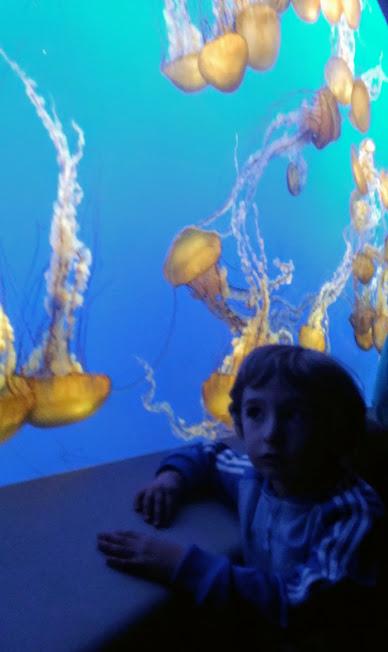 bambino che osserva una vasca di meduse all'acquario di monterey in California