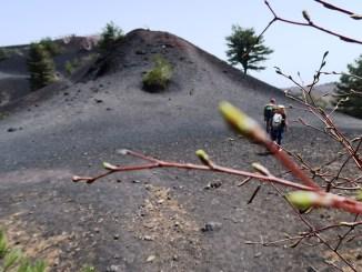 ramo di betulla con vista sull'Etna