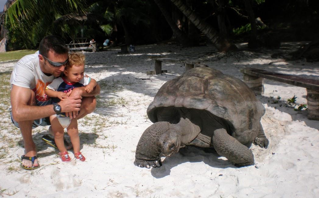 bambino che guarda una tartaruga gigante alle seychelles