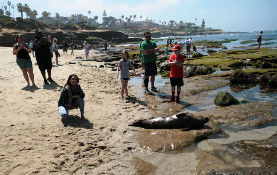 foche alla spiaggia de La Jolla a san Diego ideale per i bambini
