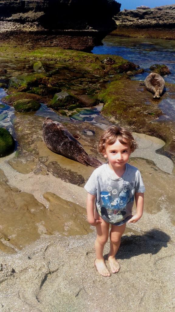 bambino che gioca vicino ad una foca in una spiaggia di San Diego