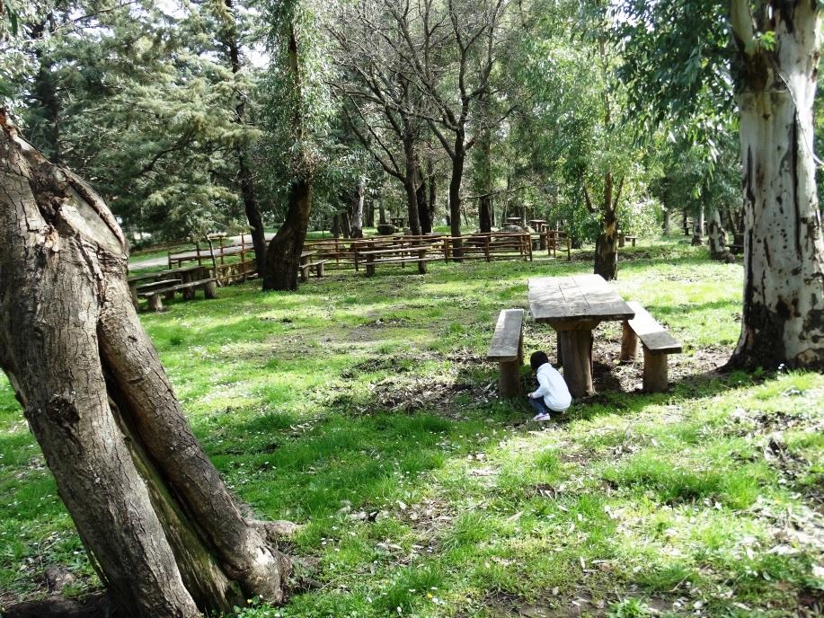 Area Attrezzata sul Monte Altesina
