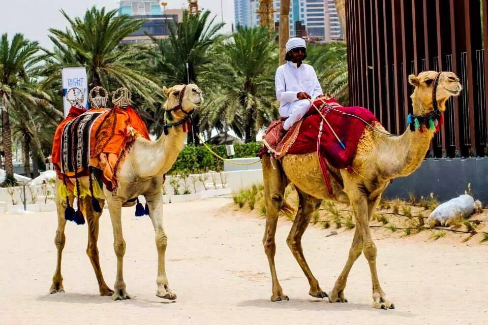 uomo su un dromedario a Dubai