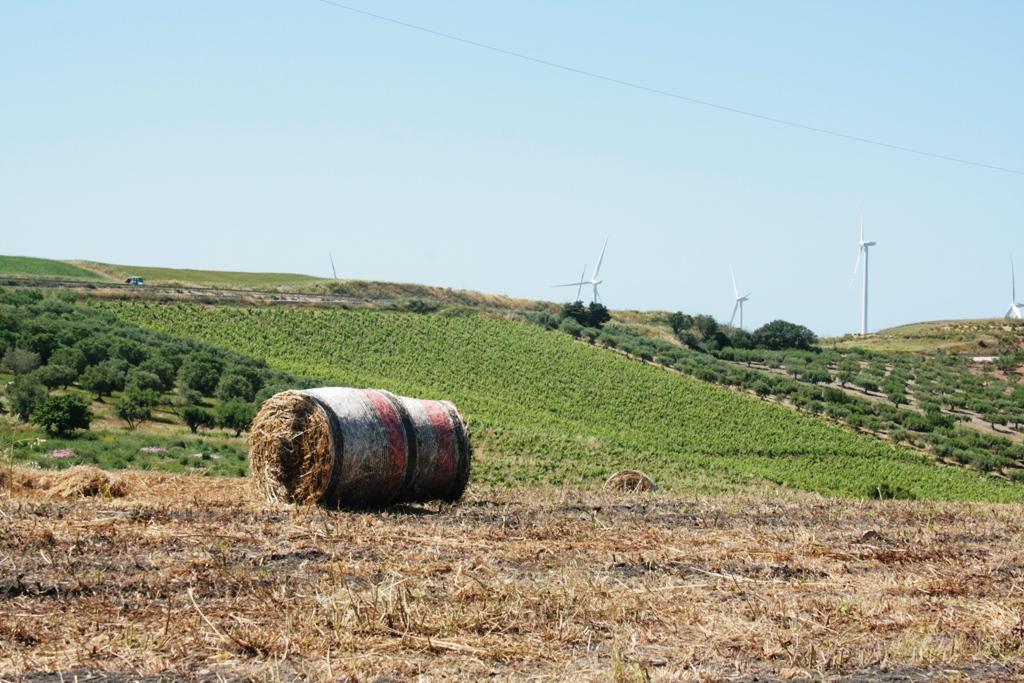 campagna di Trapani vicino una fattoria didattica