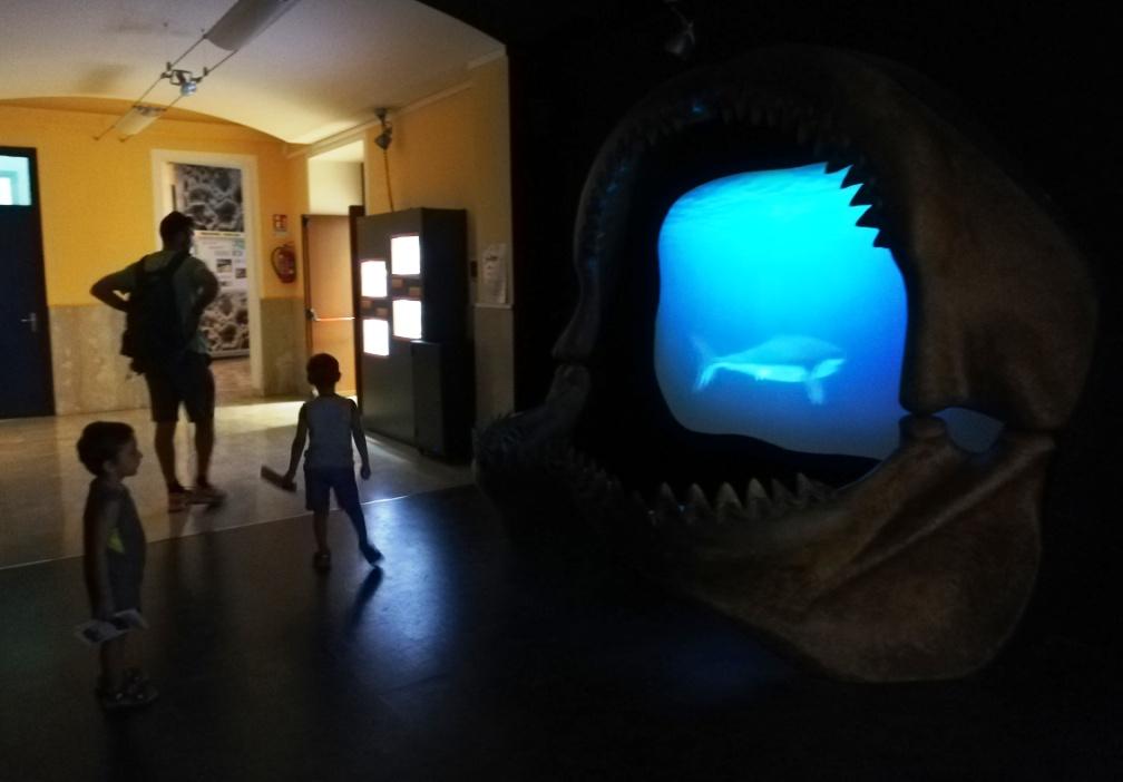 ricostruzione megalodonte al museo geologico gemmellaro