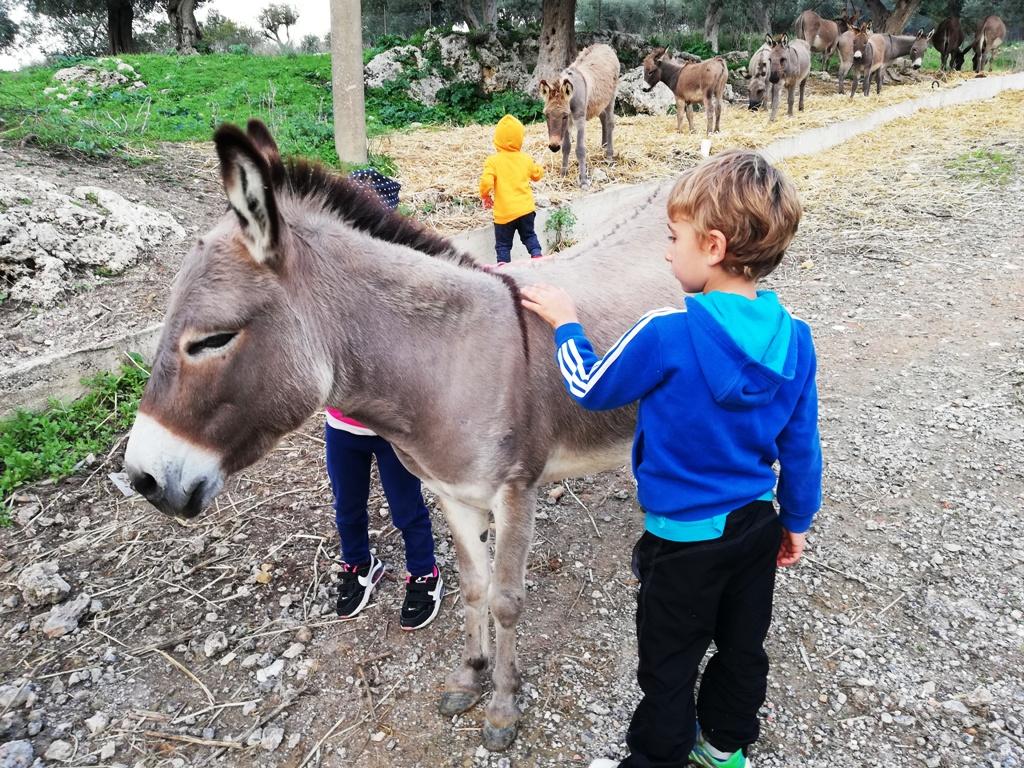 un bambino in gita scolastica in fattoria