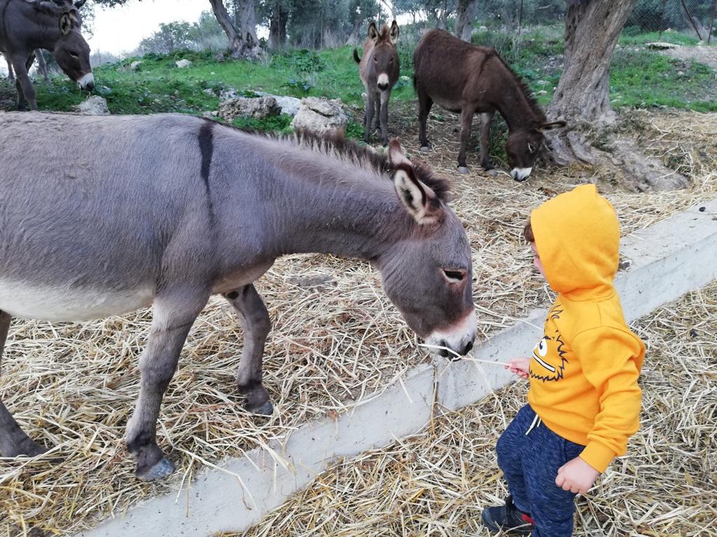 mamma e bambino con degli asinelli in una fattoria didattica