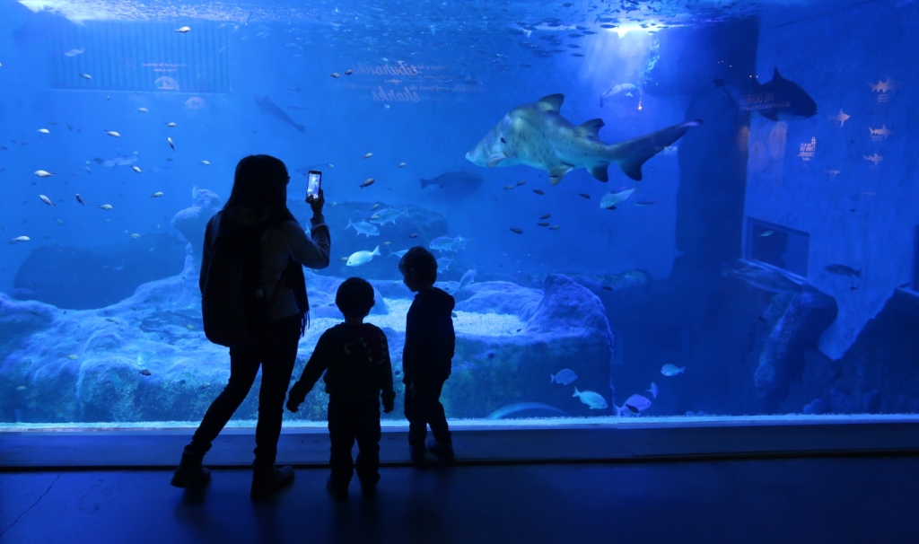 bambini all'acquario di Siviglia