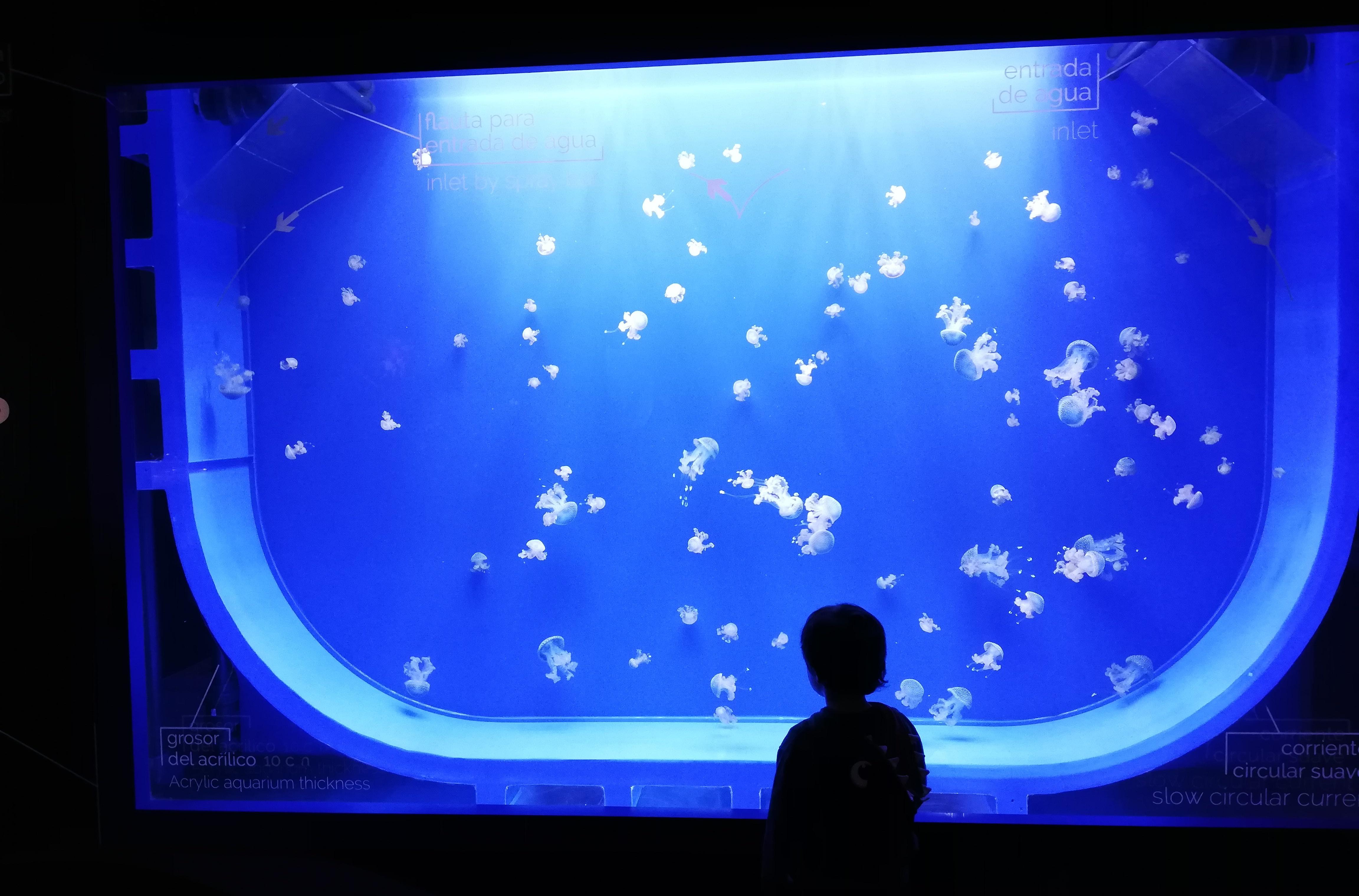 un bambino che guarda le meduse all'acquario di siviglia