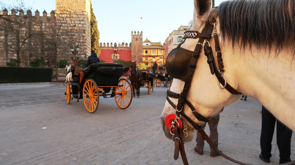cavallo nella piazza di Siviglia