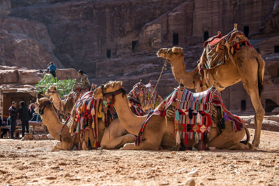 cammelli alla città perduta di Petra