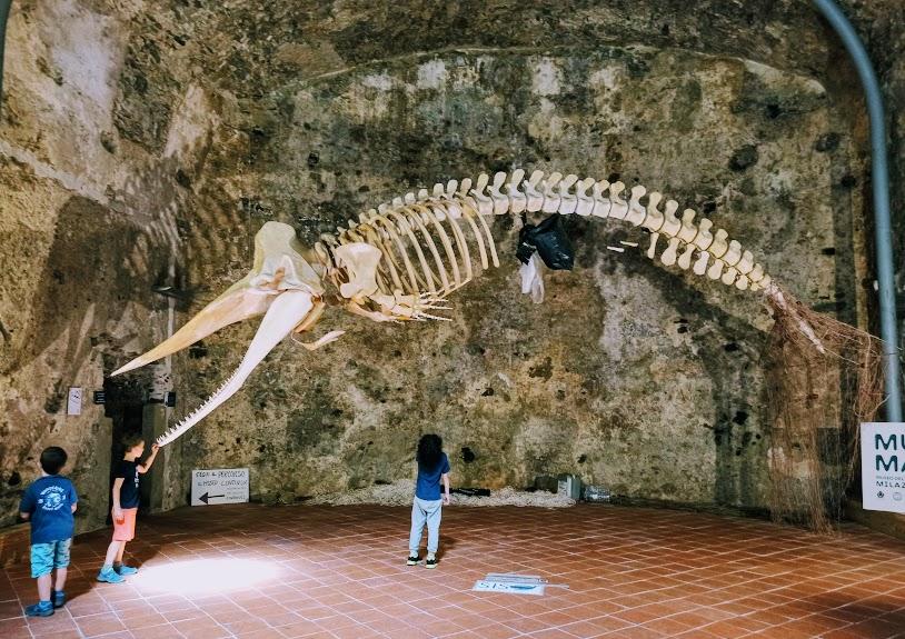 un capodoglio al museo del mare di Milazzo