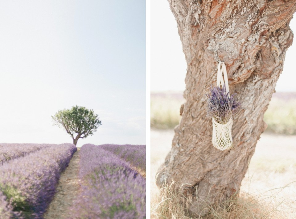 Where to see the Lavender Fields of Provence (and get great photos!)