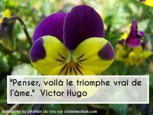 fleur-pensee-jaune-violette-20070415