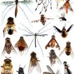 Rêves : rêver d'insectes