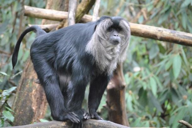 seattle woodland park zoo