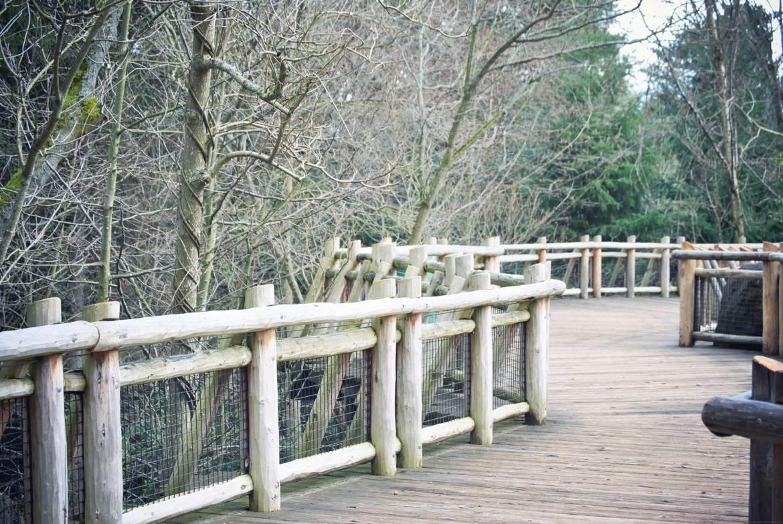 woodland park zoo seattle (4)