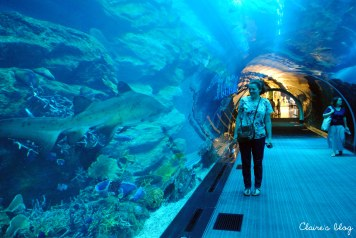 Le plus grand aquarium du monde Dubaï Emirats Arabes