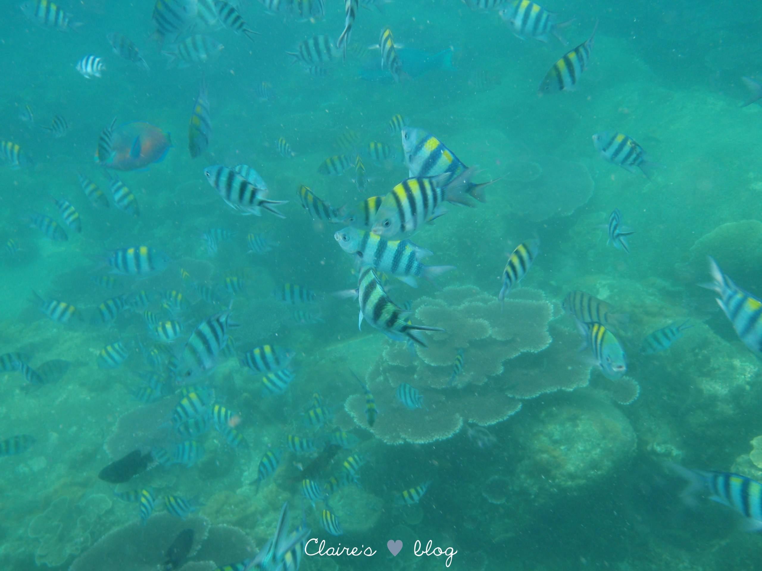 Partons faire du snorkeling à Tioman - Malaisie