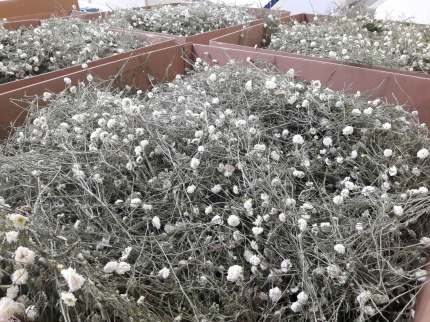 herbier-yves-rocher-cosmetiques-la-gacilly-bretagne-(11)