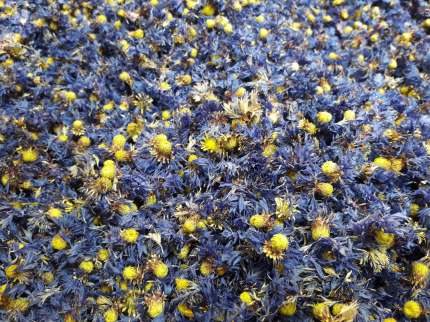 herbier-yves-rocher-cosmetiques-la-gacilly-bretagne-(2)
