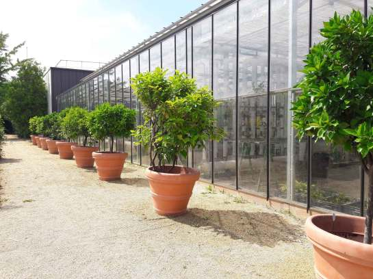 herbier-yves-rocher-cosmetiques-la-gacilly-bretagne-(5)