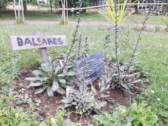 la-planete-plantes-en-voie-d'extinction-yves-rocher-jardin-botanique-la-gacilly-(5)