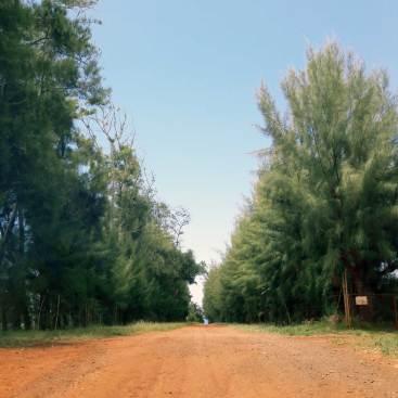 kauai-hawaii-clairesblog-(191)