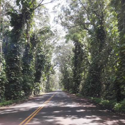 kauai-hawaii-clairesblog-(393)