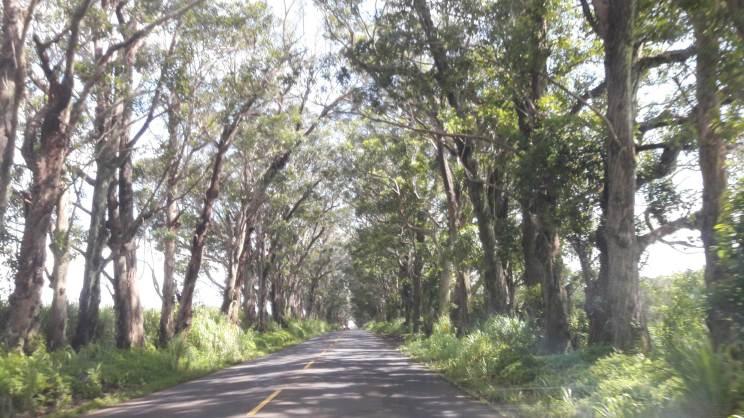 kauai-hawaii-clairesblog-(398)