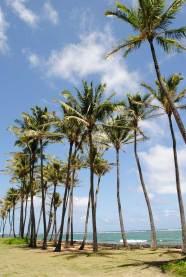 kauai-hawaii-clairesblog-(433)