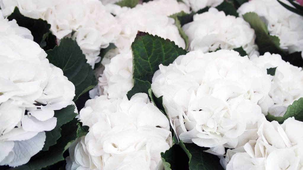 marché aux fleurs quoi faire à londres angleterre voyage