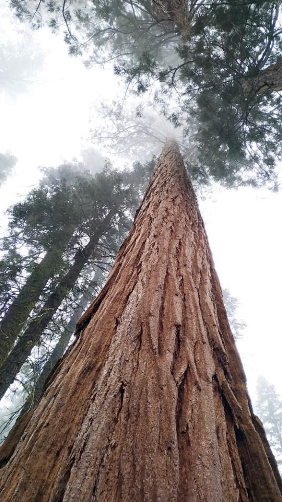 sequoia park etats unis road trip (15)