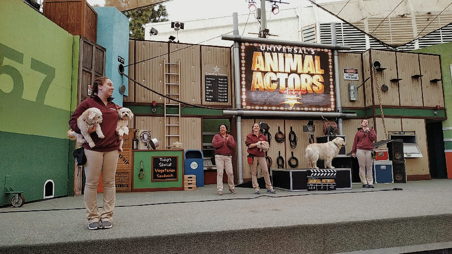 animal actors dressage universal studio