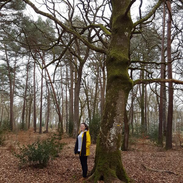 Forêt de Rennes Bretagne 100km