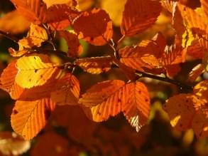 autumn-3130_1280