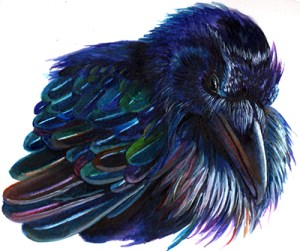 watercolor of crow