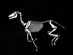 skeleton horse running