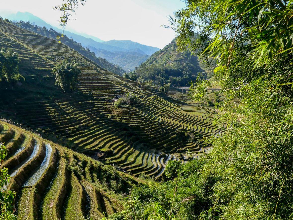 Claironyva Vietnam Sapa Rizières