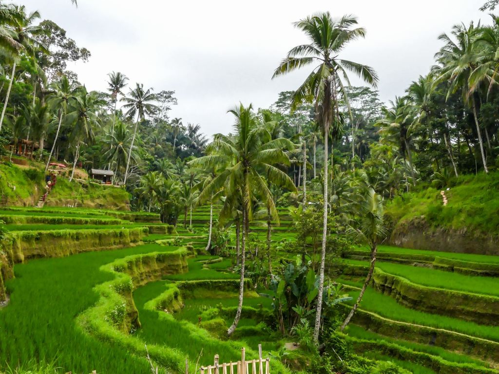 Tegallalang ricefields