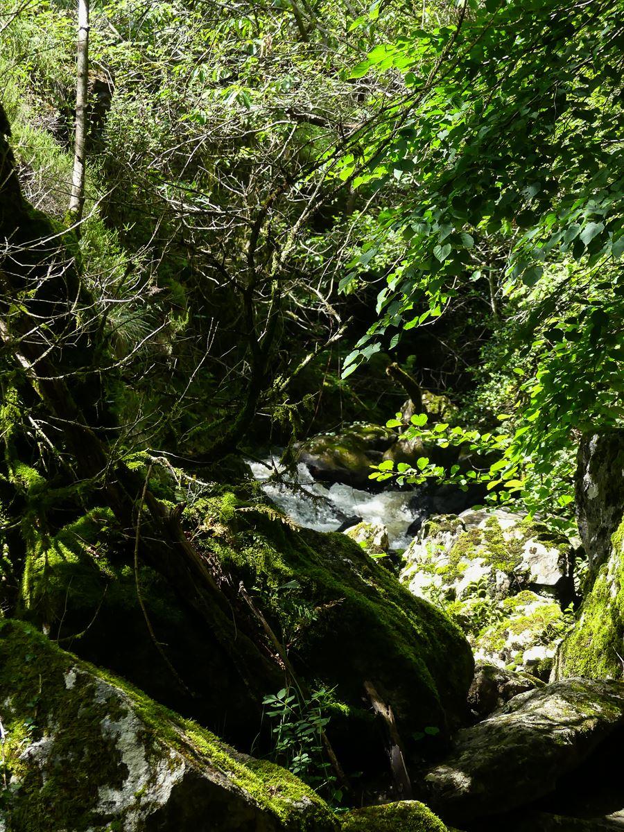 Tarn Sidobre Saut de la truite