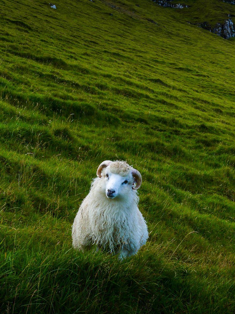 Hello le gentil mouton