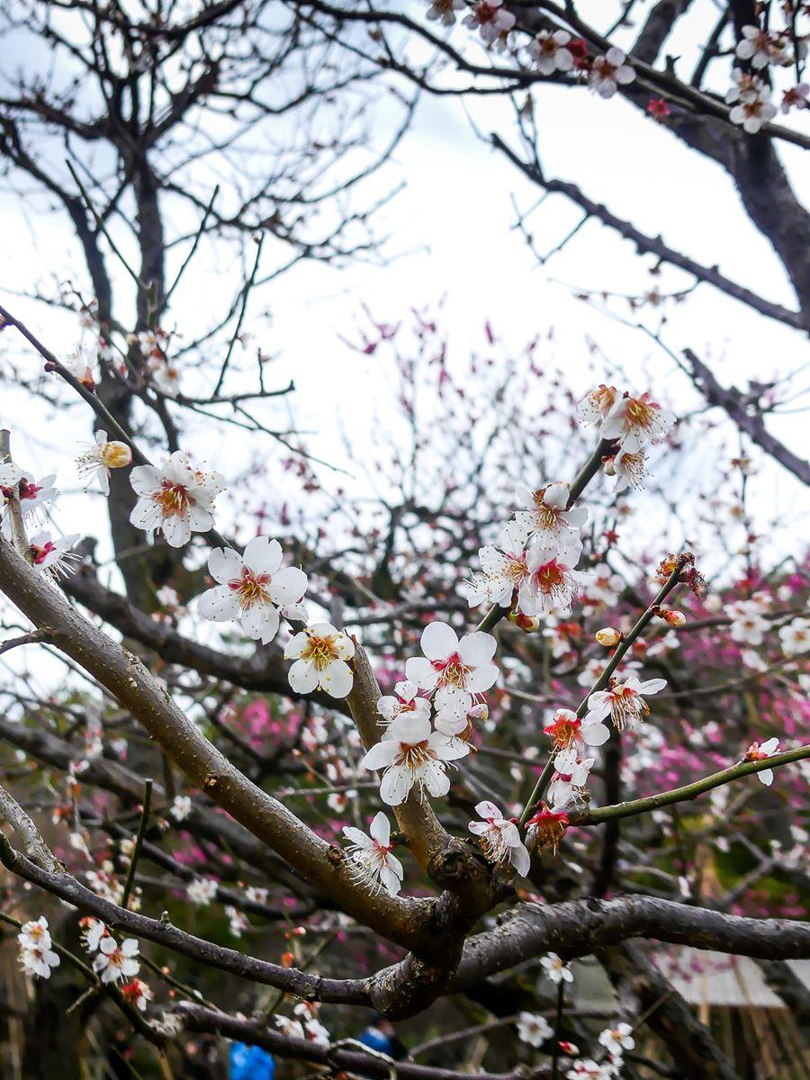 Jardin Kenroku-en - Kanazawa