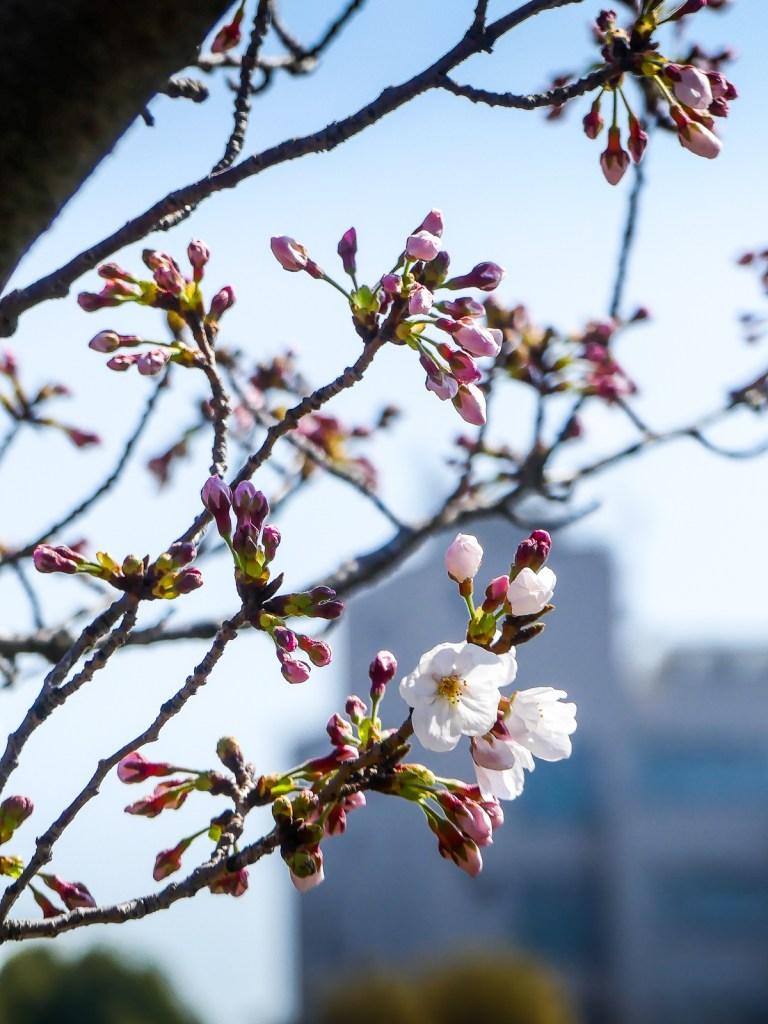 Parc de Ueno - printemps